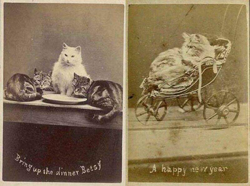 Фото из серии Пойнтера «Кошки Брайтона».