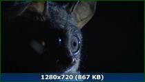Сокрытые миры / Скрытые миры / Hidden Kingdoms (2014) BDRip 720p