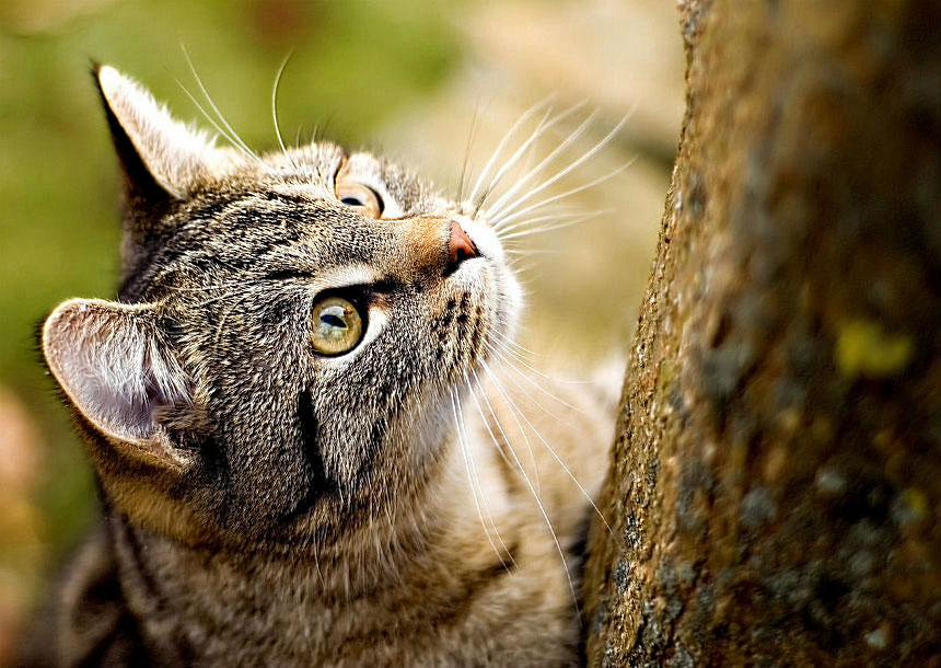 Дом высокий в пять окошек, здесь живет семейство кошек.