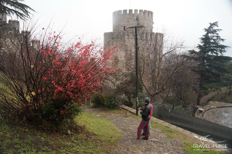 цветы в крепости