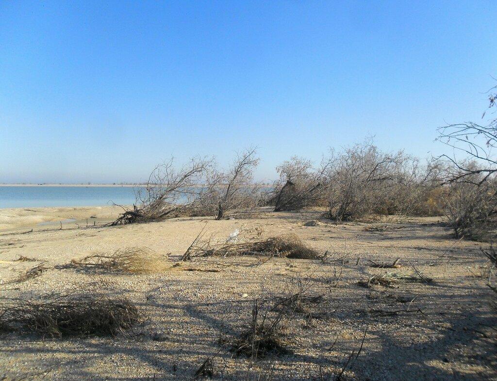 На берегу... SAM_4529.JPG