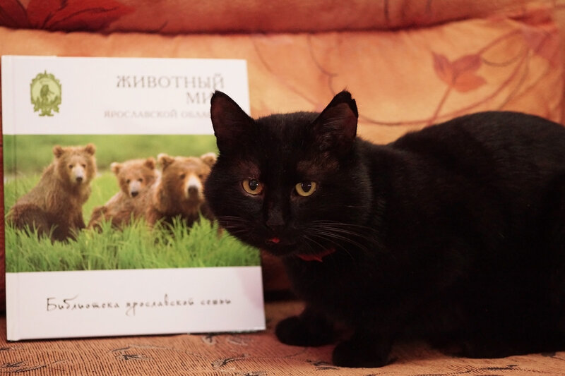 В Ярославской обл. вышла книга, где есть мои фото стрекоз
