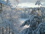 zima-sneg-derevya-priroda.jpg