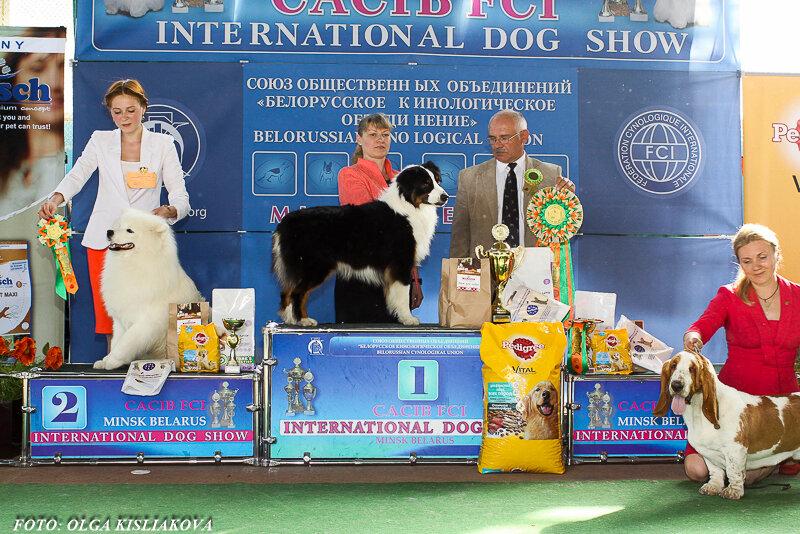 Выставочные успехи наших собак - 5 - Страница 29 0_165f0c_326a4087_XL