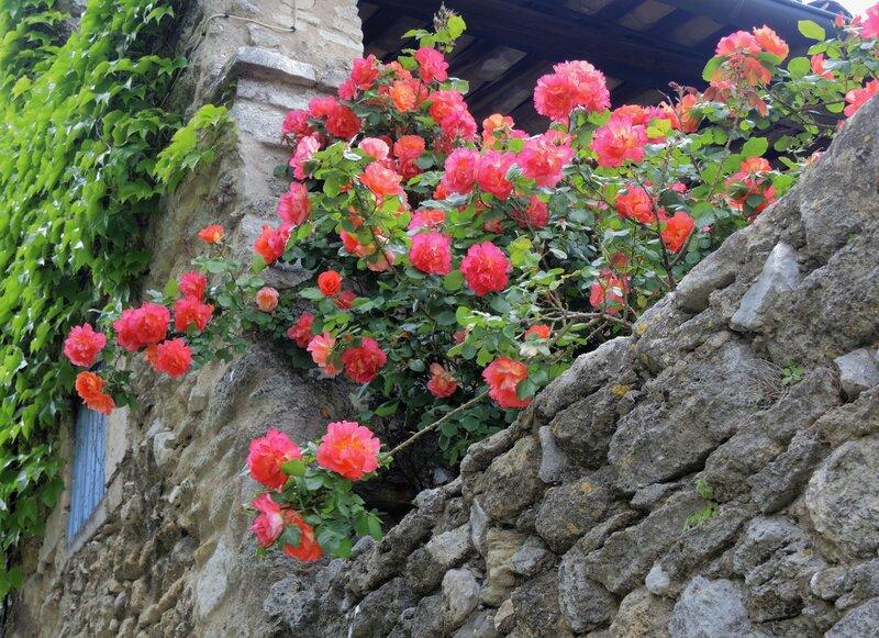 Розы Менерба