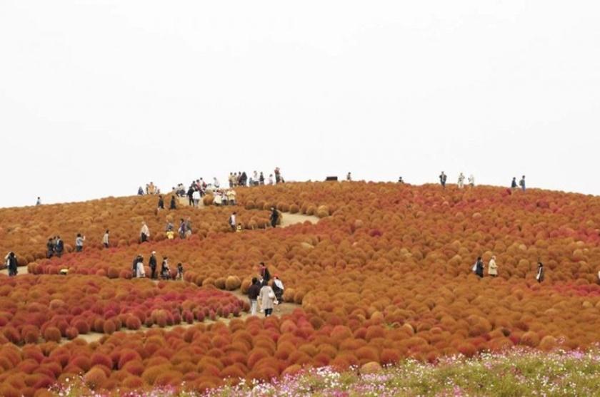 Живописный японский парк Хитати Кайхин 0 1422d1 ca38673b orig