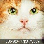 0_f6539_4e5d6d28_L.jpg