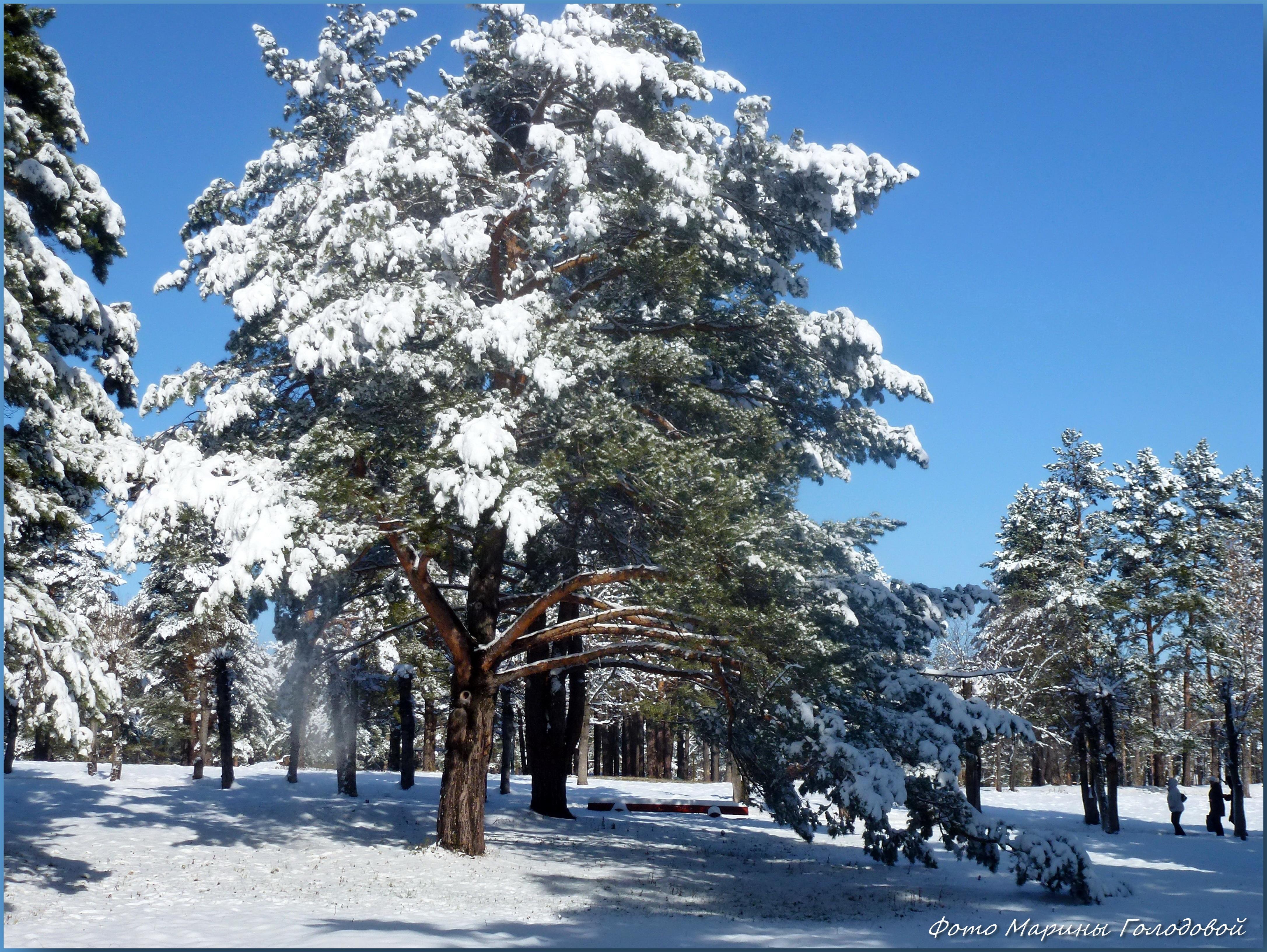 Начало зимы в Зенковском парке. Фото - ©Марина Голодовой