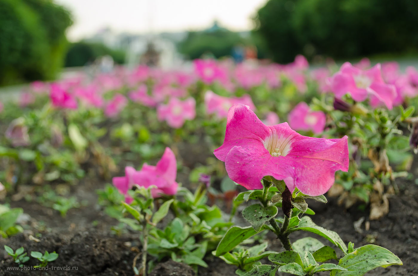 Фотография 24. При съемке цветка пришлось фокусироваться в ручном режиме (400, 35, 5.6, 1/125). Любительская зеркалка Nikon D5100 KIT 18-55