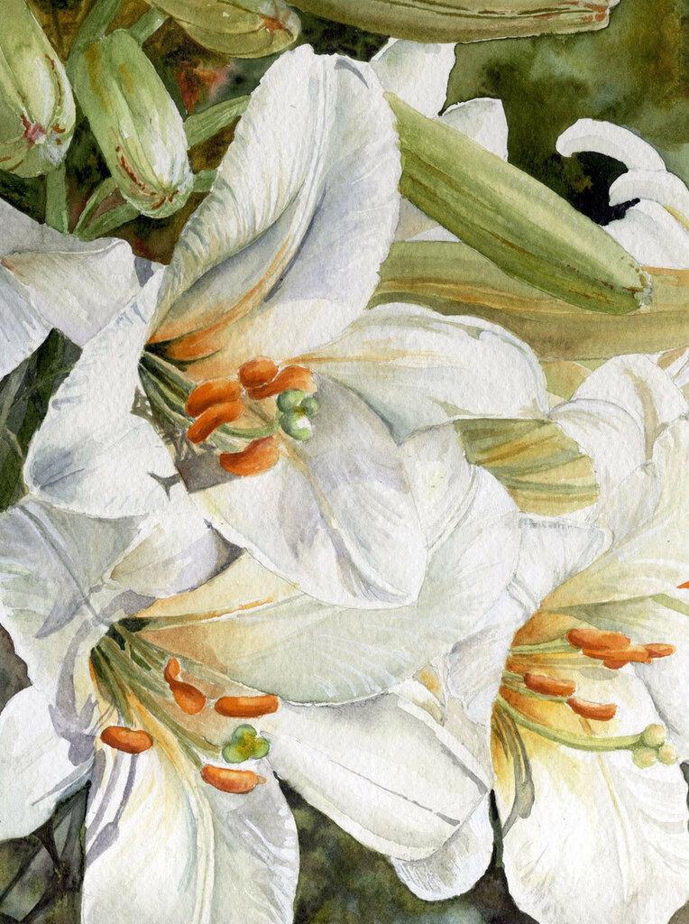 Акварелью нарисую я цветы, что так люблю.Yvonne Harry художник- самоучка