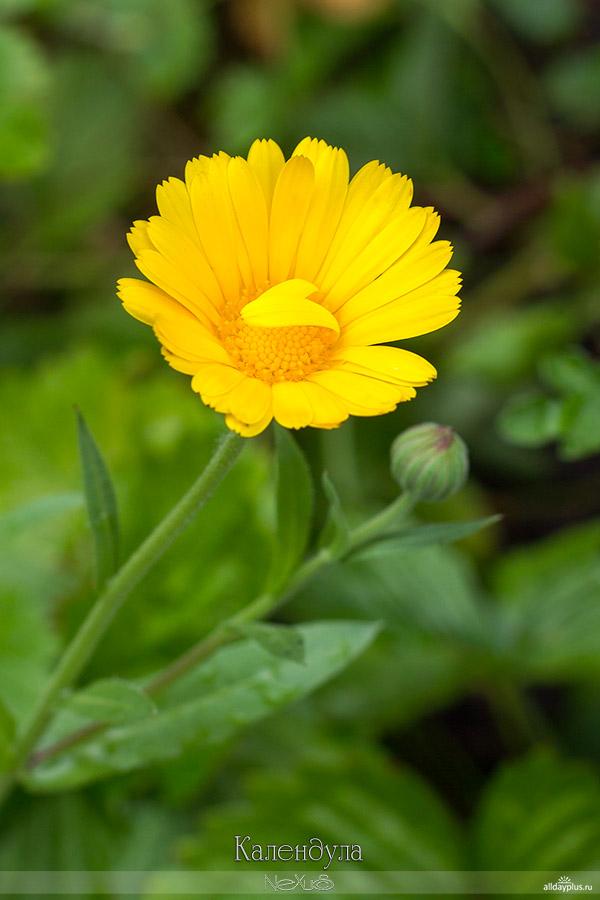 Я люблю все цветы, выпуск 127 | Разные цветы.