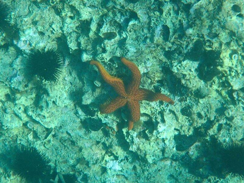 Подводный мир Адриатики 7.jpg