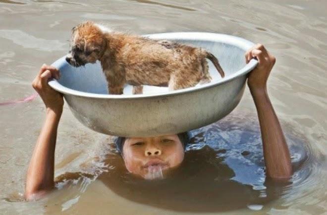 Как люди спасают животных 0 12cff1 68a54c6d orig