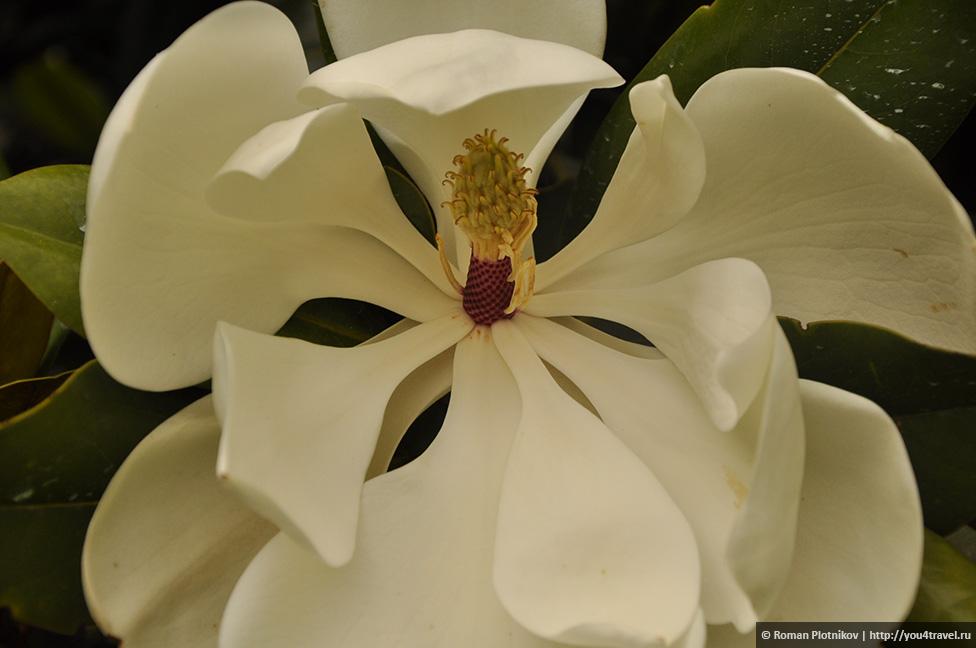0 1919bc 15177c1 orig День 212 213. Прощай, Колумбия! Ботанический сад в Боготе
