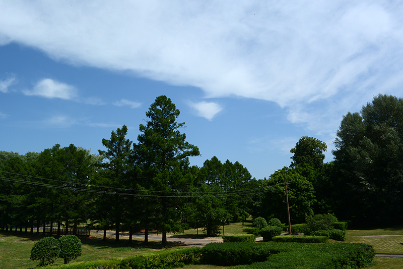 парк усадьбы