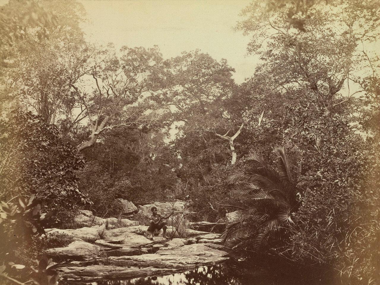 Водный бассейн в лесу в колонии Наталь