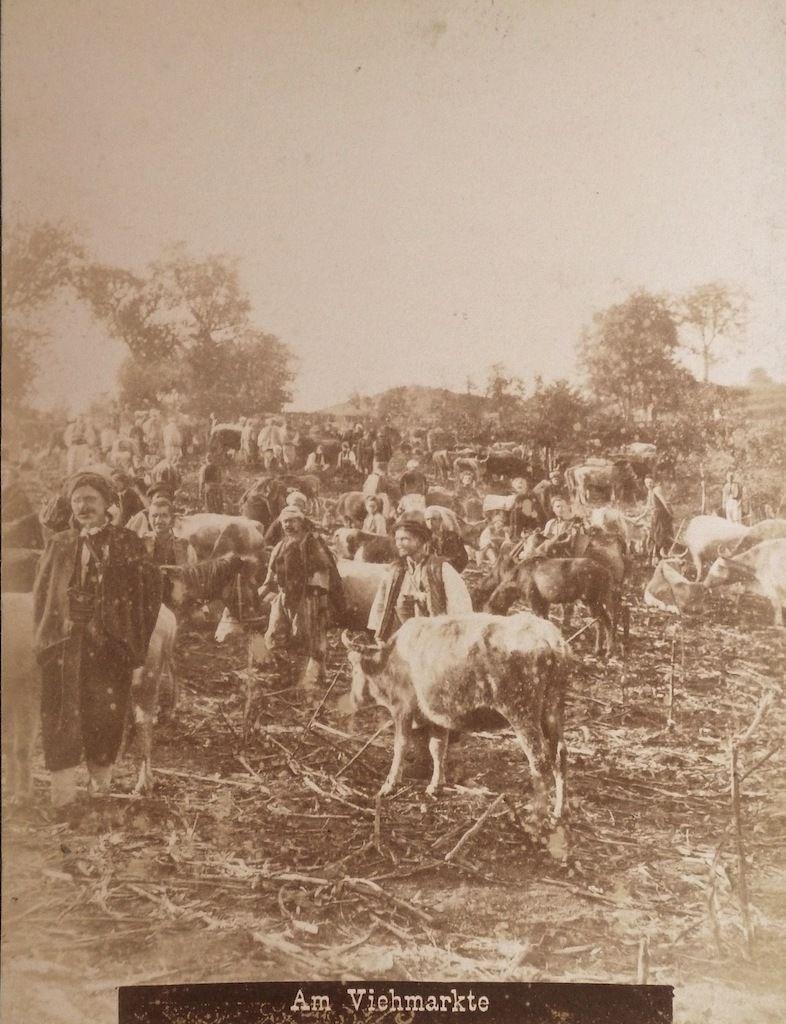 Рынок скота в Боснии