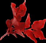 feli_btd_foliage1.png
