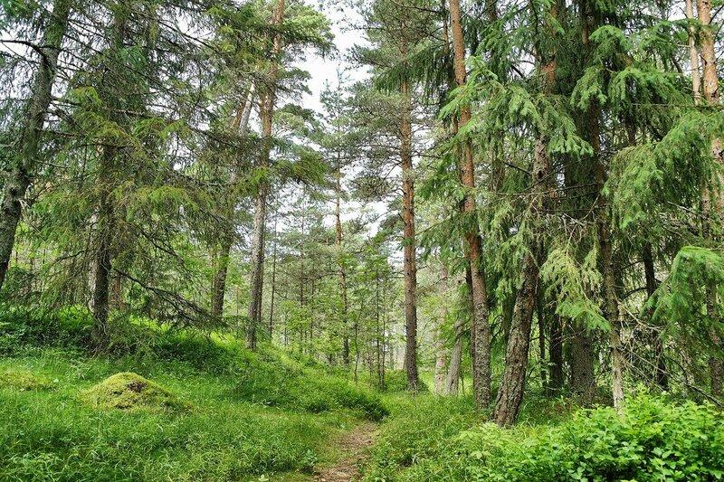 Лесными тропами.