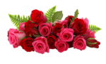 Valentijn_a (157).png