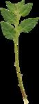 foliage1.png