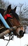 красавица лошадь Майка