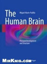 Книга The Human Brain: Prenatal Development and Structure
