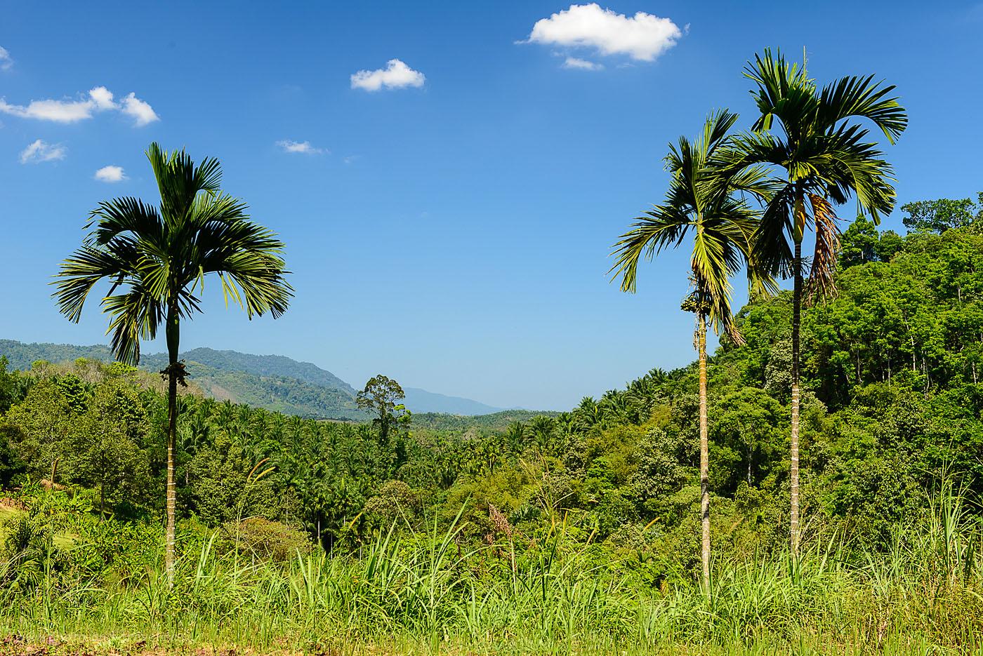 Фото 1. Поездка в Таиланд самостоятельно. Отзывы туристов. Пейзаж в горах по дороге в Ранонг напоминает тот, что мы в видели в Сьерра Мадре де Чьяпас в Мексике(фотоаппарат Nikon D610, объектив Nikkor 24-70/2.8, поляризационный фильтр Hoya HD Circular-PL, настройки съемки: ИСО 200, фокусное расстояние 50 мм, диафрагмаf/9, выдержка 1/160 секунды)