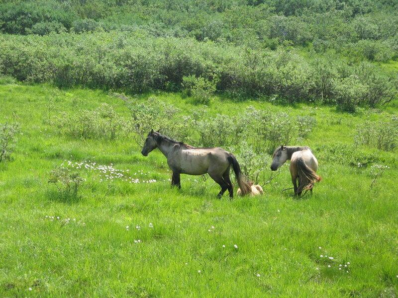 Лошади на воле