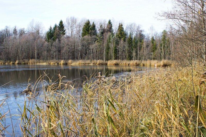 озеро Дубно, Псковская область