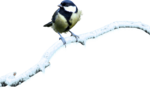 mzimm_snow_wonder_bird_on_branch_snow.png