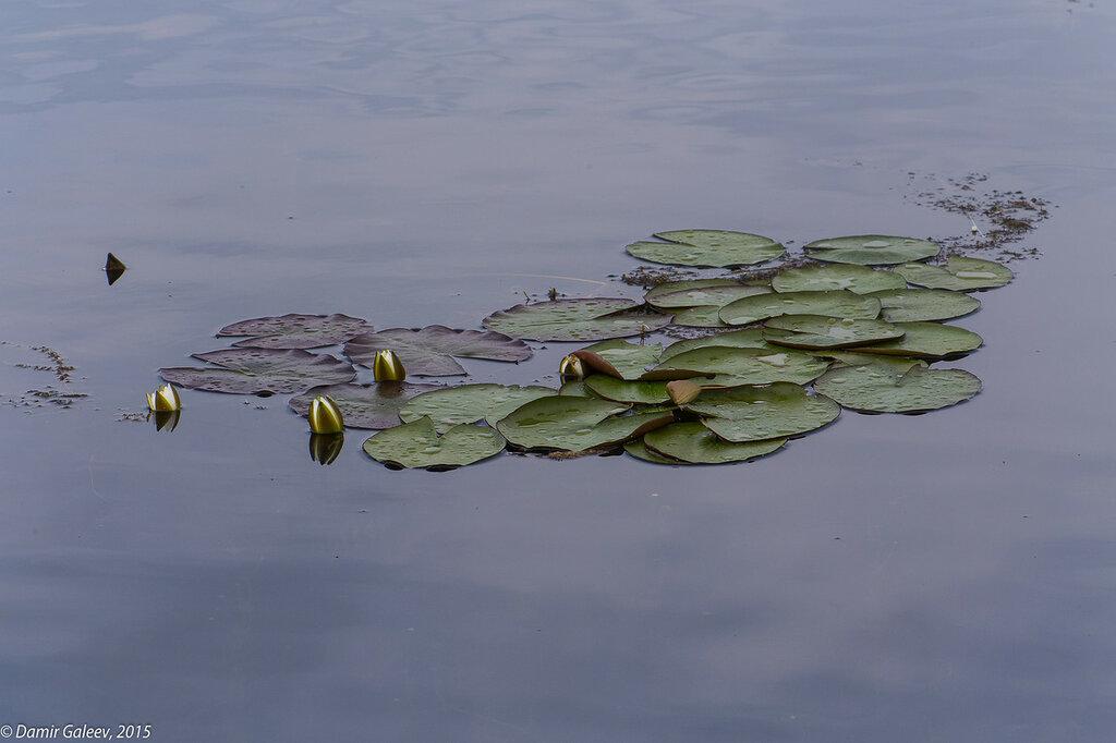 Жизнь на озере