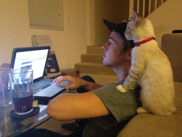коты мешают человеку работать за компьютером