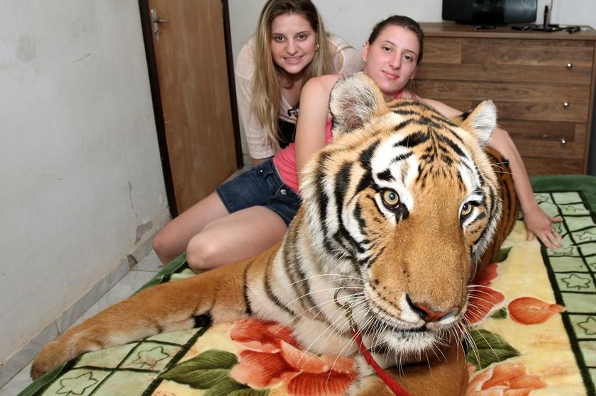 Опасные домашние питомцы бразильца Ари Борхеса