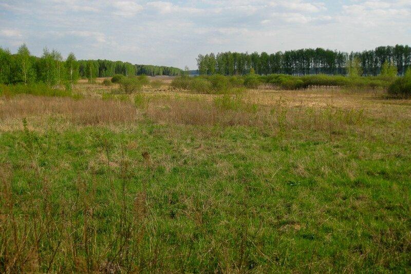 Заболоченный берег Пестовского водохранилища около Долгинихи