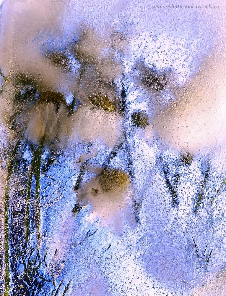 4. Цветочная композиция «Ромашки во льду». Съемка натюрморта в домашних условиях на зеркалку Nikon D610 с объективом Nikon 24-70mm f/2.8G. Параметры: ИСО 100, ФР=62 мм, диафрагма 8.0, время выдержки – 15 секунд
