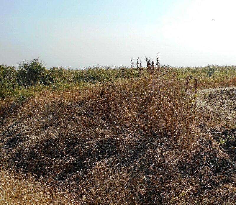 Травы ... DSCN1380 - 2.JPG