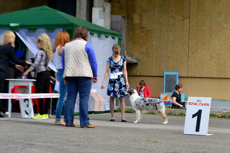 Выставочные успехи наших собак - 5 - Страница 28 0_1441db_ba89c694_XL