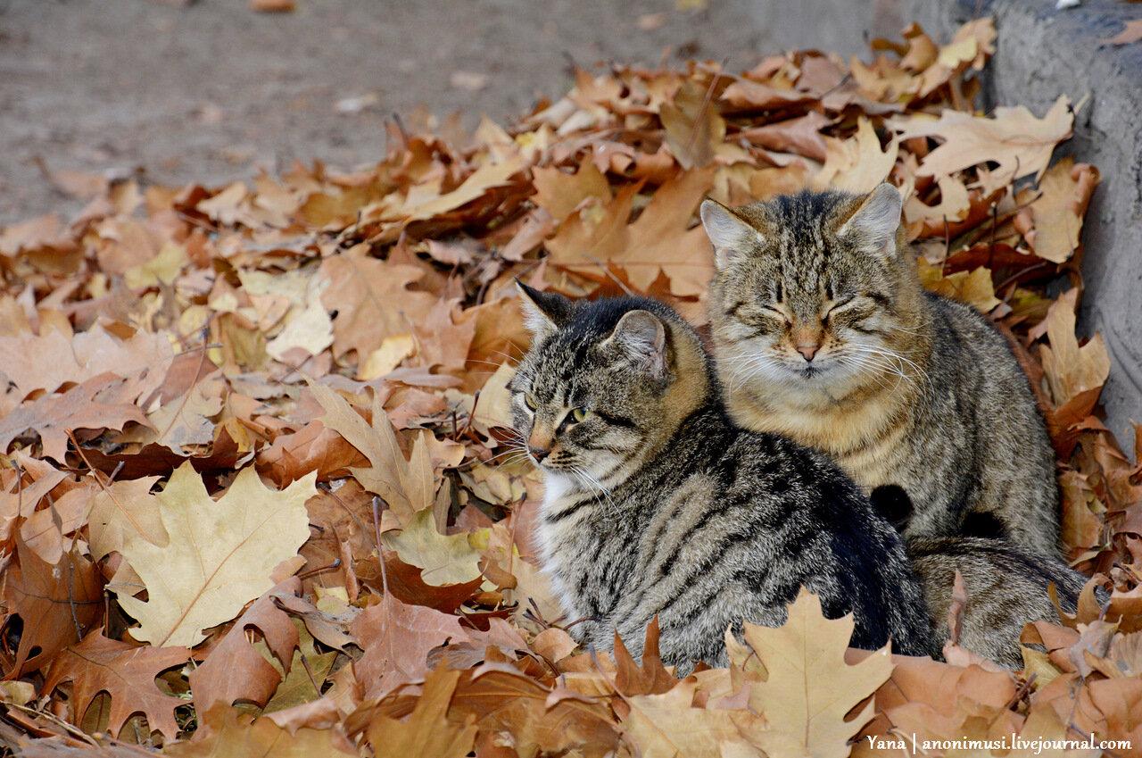 Гомельские уличные коты
