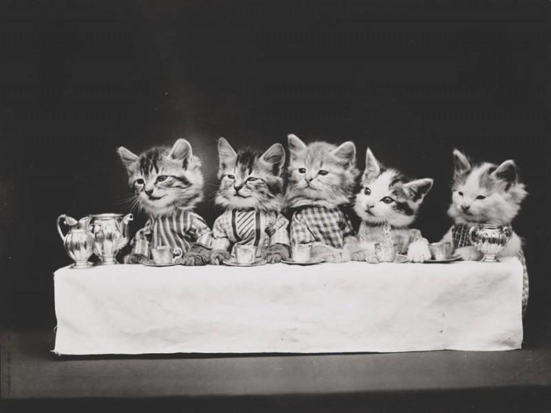 В начале XX века интернета еще не было, но все уже угорали по котикам (13 фото)