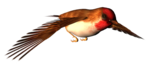 Bird-GI_SummerBreeze.png