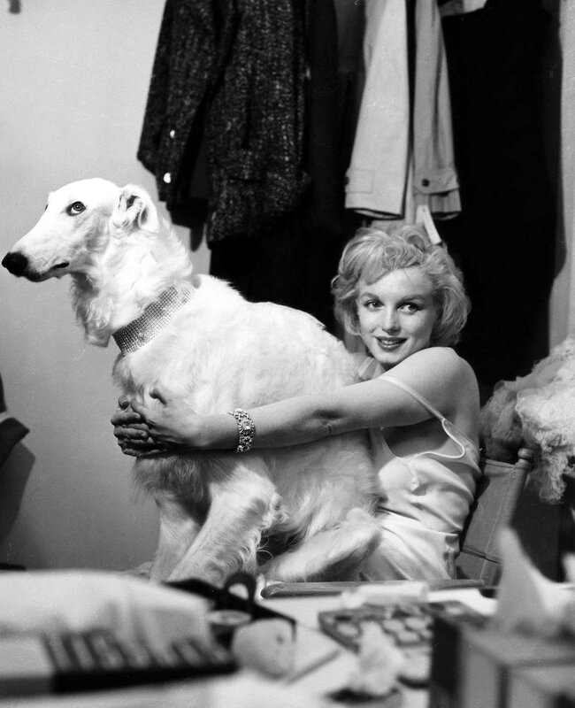 Marilyn Monroe and a dog.jpg