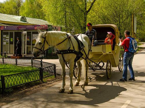 Конные прогулки в Кузьминках.