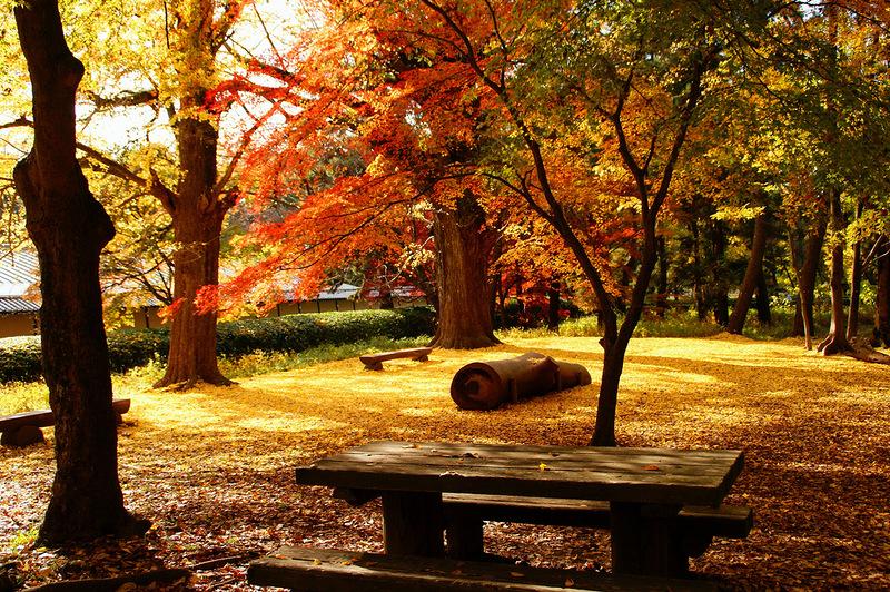 Осенние краски Киото