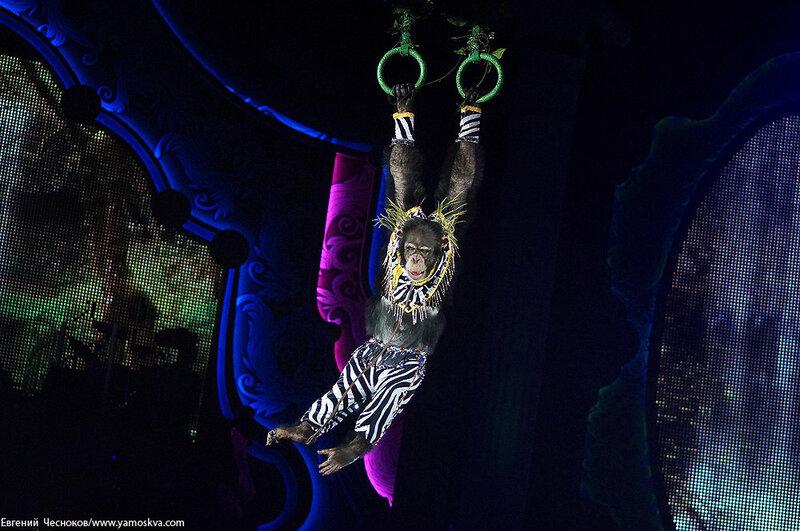 Зима. Королевский цирк. 20.02.15.25.Африка..jpg