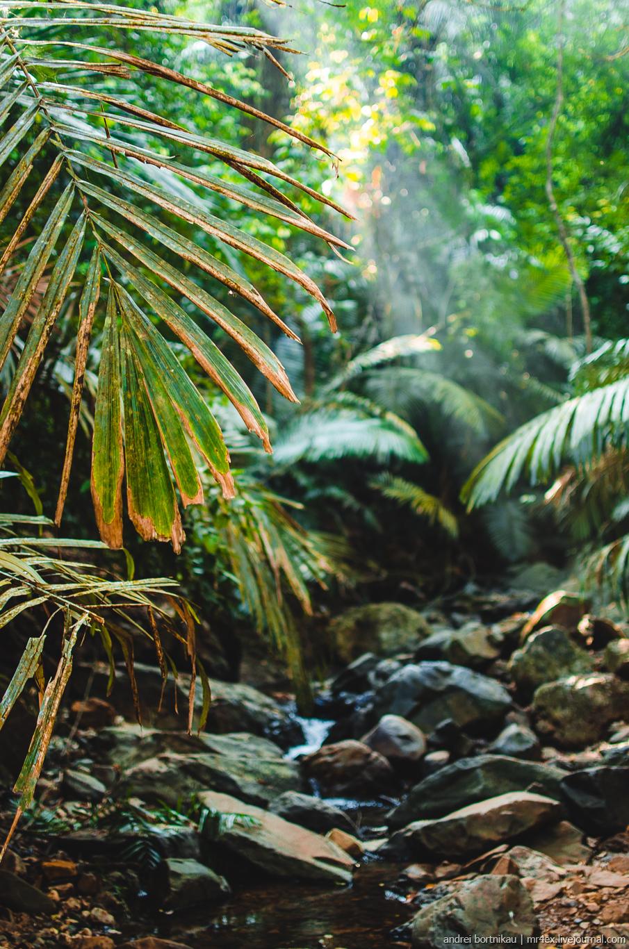 Джунгли в Гоа