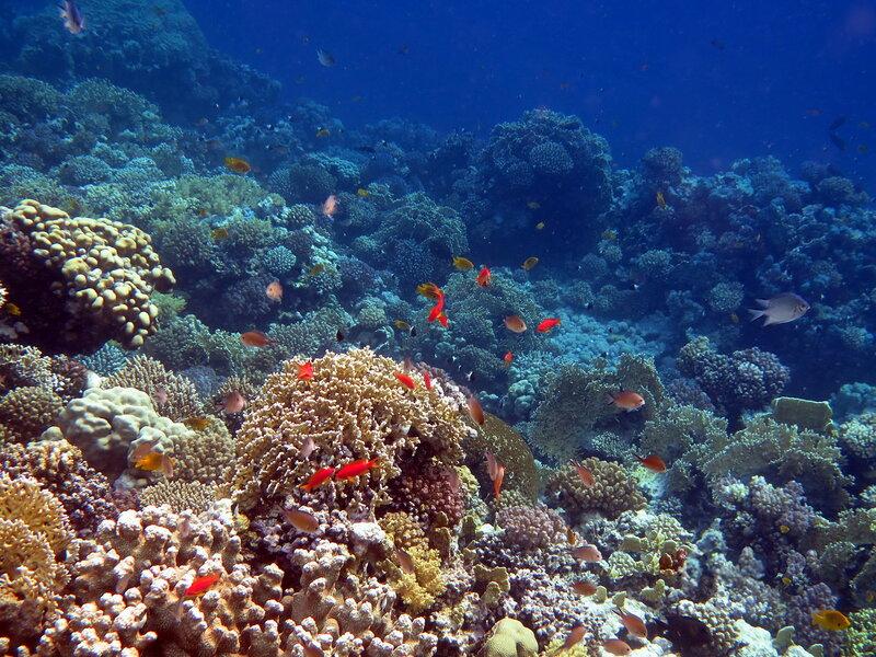 На внешнем рифе