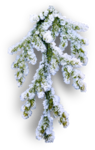 mzimm_snow_wonder_snowbranch2_sh.png