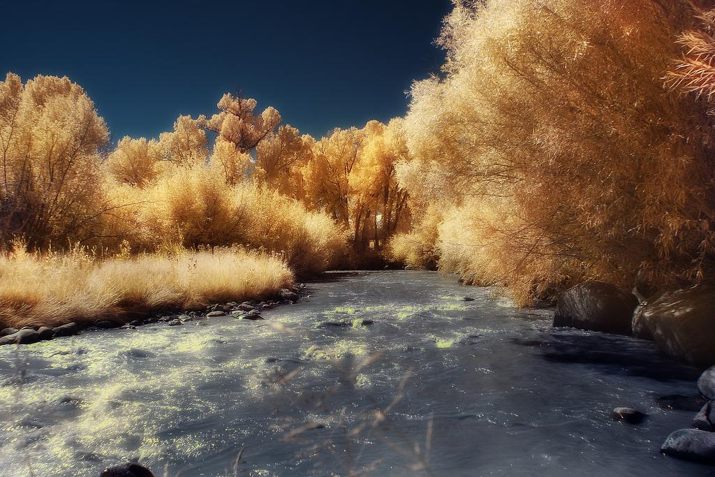 Winterized, Greg Westfall_1280.jpg