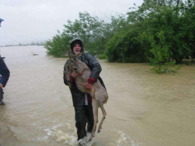 Как люди спасают животных 0 12cfec f08e8815 orig